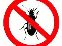 �Texoma Pest Management are highly qualified experts in