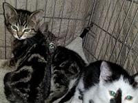 Pesto and Patrick's story These 2 brothers are gorgeous