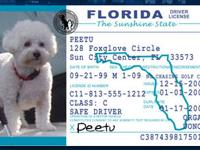 Get a Pet ID Tag that looks like a Driver's License for