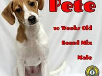 Pete's story You can fill out an adoption application