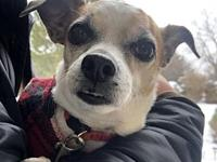 My story Hi, I'm Peter! I am a 9-year-old Chihuahua mix
