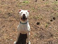 Petey's story Petey is a awesome high drive boy with
