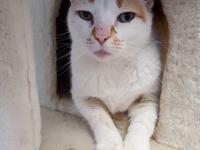 Petey is an 8 year old, neutered, domestic short hair.