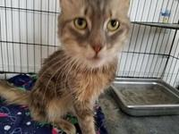 Petey's story Petey 3-4 years old DSH/Neutered Male See