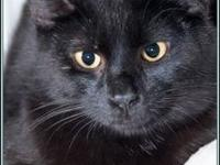 PETEY's story $97.50 FEE INCLUDES: neutering/spaying,