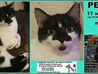 Petey's story Cat adoption fees $85-$100 plus tax Dog