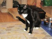 Petey is an adult, neutered male, tuxedo.  He is a very