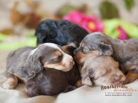 This darling litter is quite special because they will