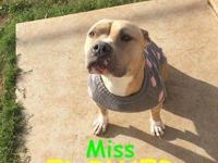Miss Flower Girl is a PETITE, 5 year old, Spayed,