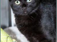 PETRA's story $97.50 FEE INCLUDES: neutering/spaying,