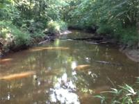 Beautiful hardwood bottoms with Blue Creek along the