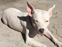 Petunia's story Petunia is available for foster or