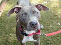 PETUNIA's story A180699 Petunia is a 2 year old, 42 lb,