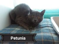 Say hello to Petunia.  She is adorable.  She is a
