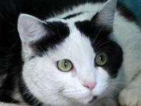 Petunia is a cover-girl gorgeous, 3-year-old spayed