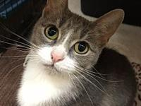 Petunia's story Meet Petunia! This pretty lady is about
