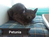 Petunia's story Say hello to Petunia. She is adorable.