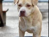 My story I am a sweet lovable boy looking for a home! I
