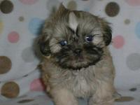 This sweet little girl is just so cute. $600.00 as a