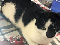 Phinneas's story Phinneas is a young neutered and