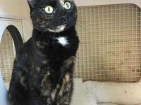 Phoebe is a beautiful tortoiseshell cat who was born to