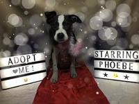 Phoebe's story You can fill out an adoption application