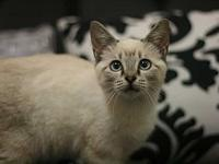 Phoebe's story Adoption fee for cats is $65.00 which