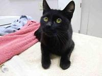 PHOEBE's story PHOEBE - ID#A085678 is a female, black