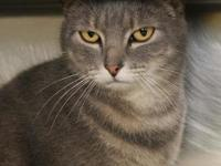 Phoeber's story Phoeber is a sweet kitty looking for a