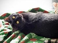 Phoenix (Bonded with sister Spunky)'s story 2 yr spayed