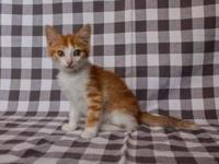 My story Hi, I'm Phyl! I'm a handsome orange and white