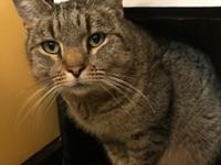 Phyllis 1 years old DSH/Spayed Female See this kitty