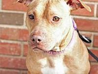 Pibbles's story Meet Pibbles! Age - 1 1/2 years old -