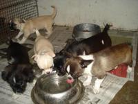 Description HAVE 4 FEMALES AND ONE BOY for sale THEY