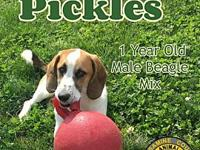 Pickles's story You can fill out an adoption