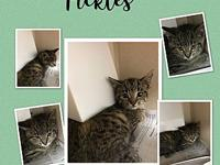 PICKLES's story 12 weeks old, neutered, chipped and UTD
