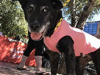 Pico's story Hi My name is Pico and I am a survivor! I