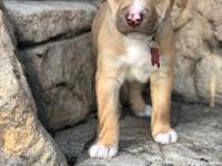 Available 4/15/18 - Pierre is a golden boy who is as