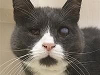 Pierro's story Love knows no age, this gentle fellow is