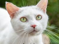 Pies's story Pies is a sweet and affectionate 2 year