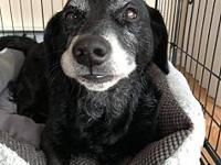 Pig's story This sweet old Gal is Pig. She is a
