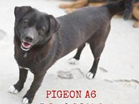 My story Meet Pigeon! Pigeon was rescued off a dog meat