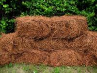 WE have a truck load of pine straw for sale. fresh