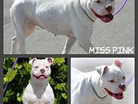 Pink's story ~ PINK ~ 2 year old, spayed female,
