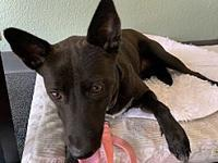 My story ***ADOPTION APPLICATION HERE***Meet Pinot,