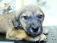 Pioneer's story Check out our latest litter rescue, the