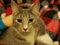 My story Pipaluk loves other cats, loves to play, and