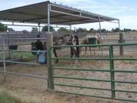 Pipe corral paddock. Includes (5) 12' panels, two gates