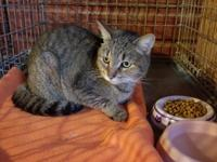 SHD spayed female. She is feisty and allows limited