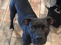 I am a 9 month old Boxer/Black Lab mix.  I am great